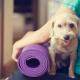 Yoga pour les chiens
